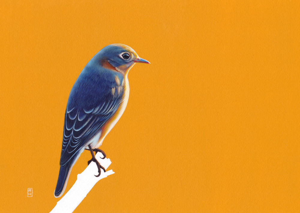 Bluebird on golden yellow