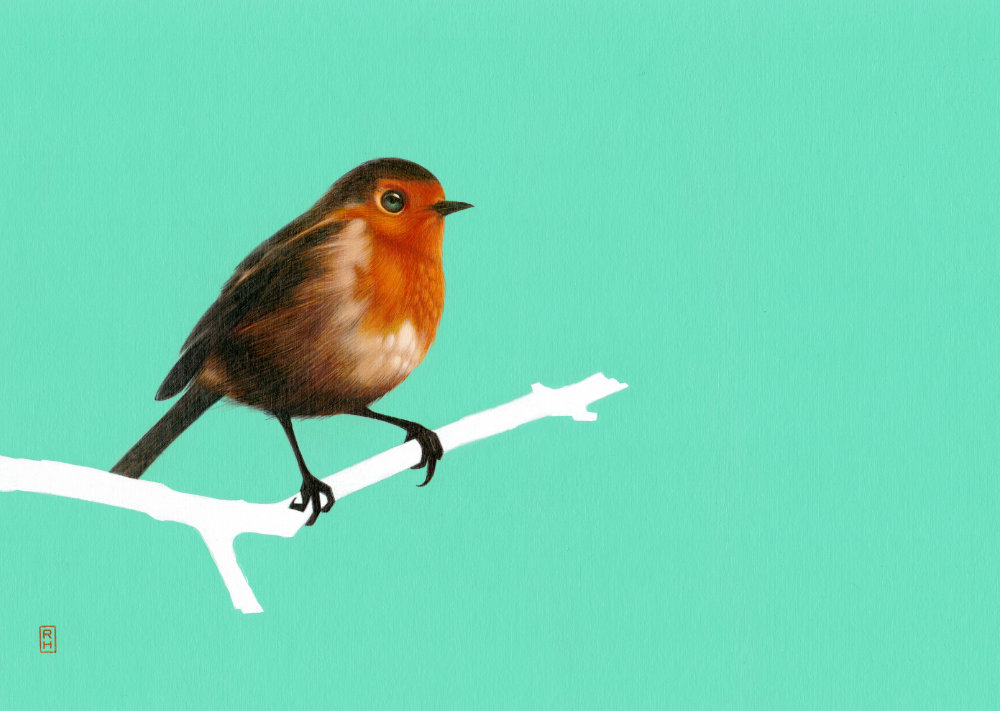 Red robin on green
