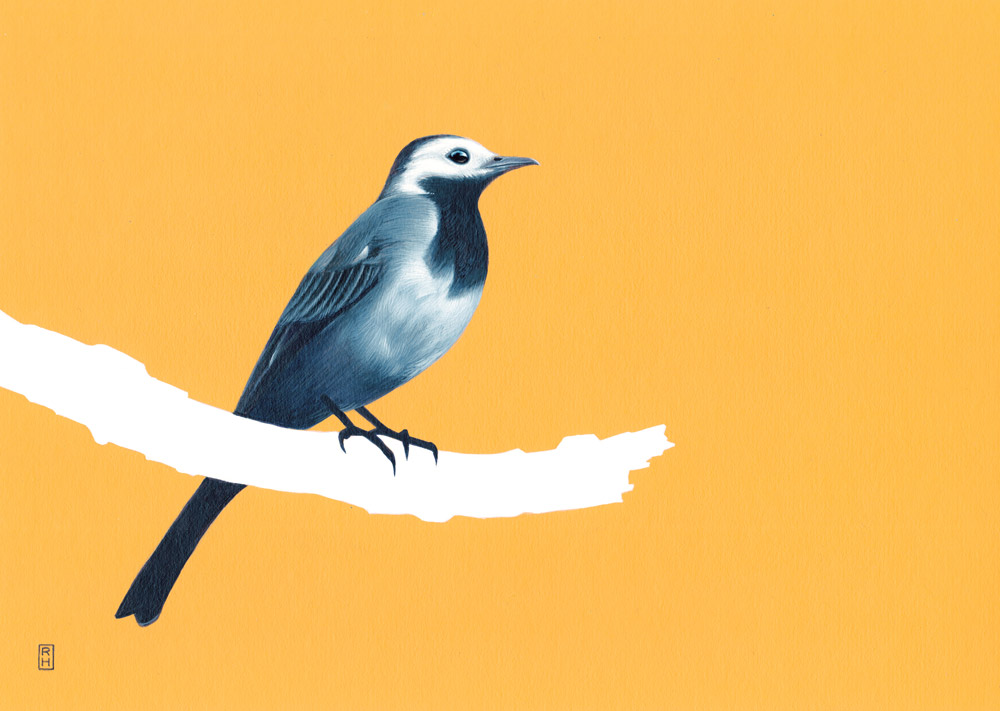 Wagtail-on-yellow